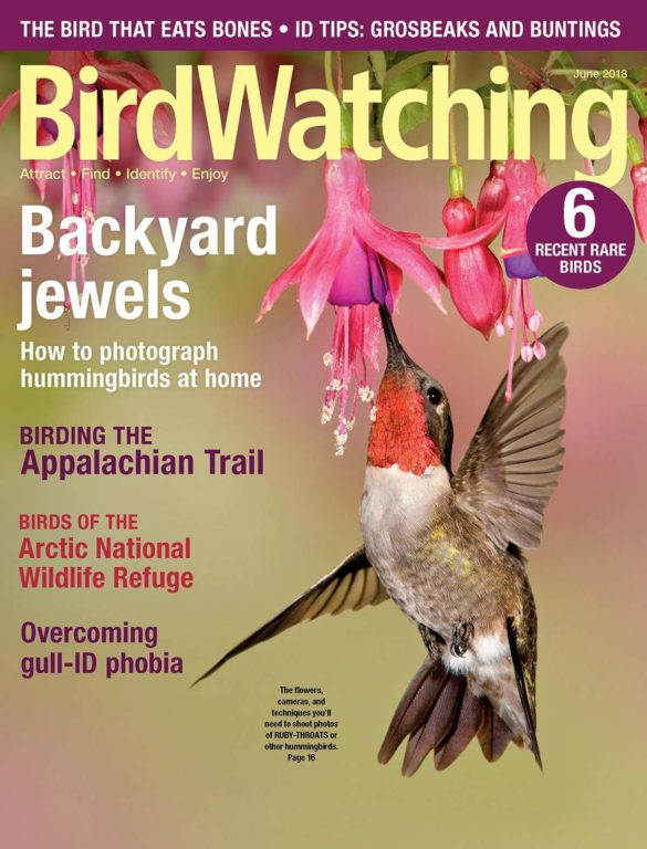 BirdWatching USA – May-June 2018