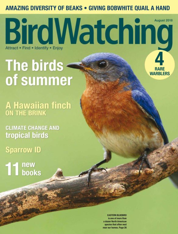BirdWatching USA – July-August 2018