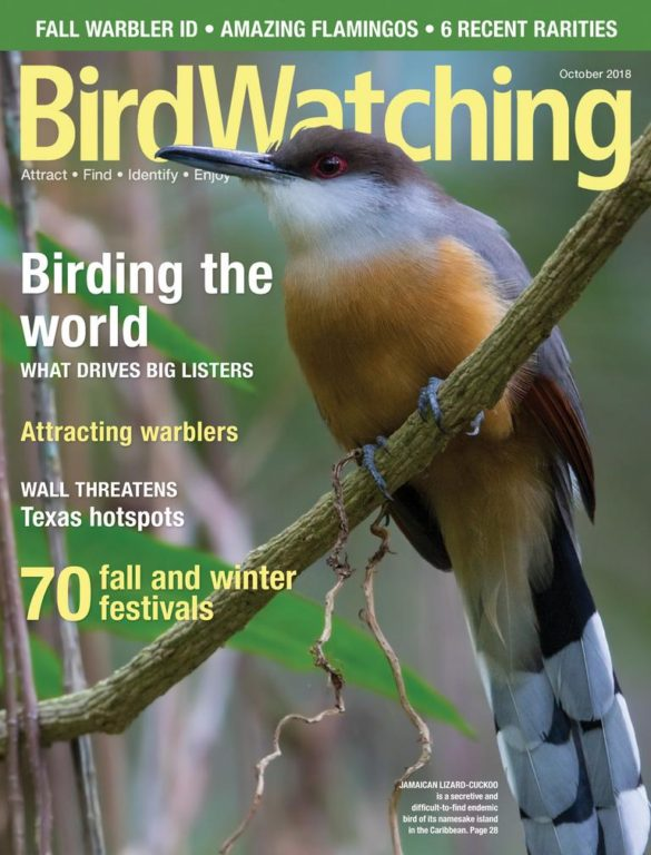 BirdWatching USA – September-October 2018