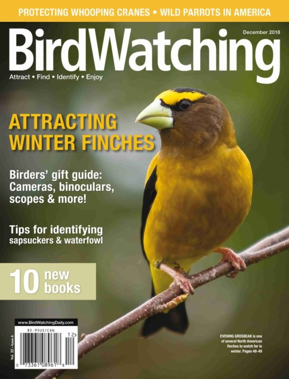 BirdWatching USA – November-December 2018