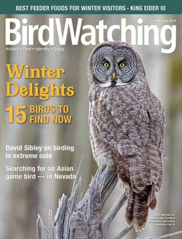 BirdWatching USA – January-February 2019