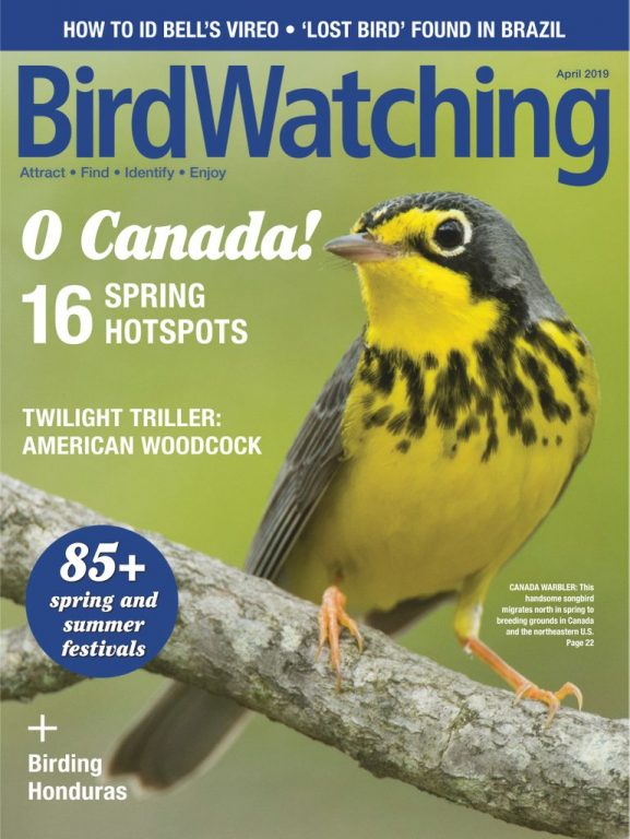 BirdWatching USA – March-April 2019
