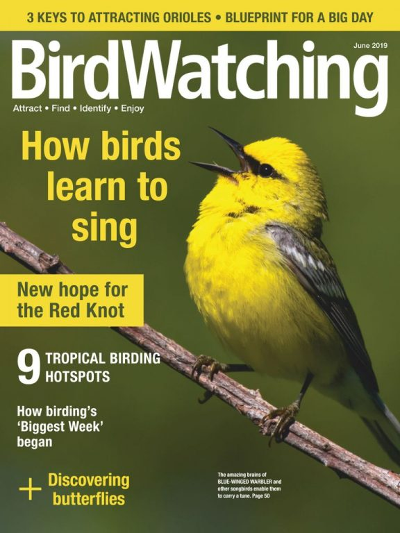 BirdWatching USA – May-June 2019
