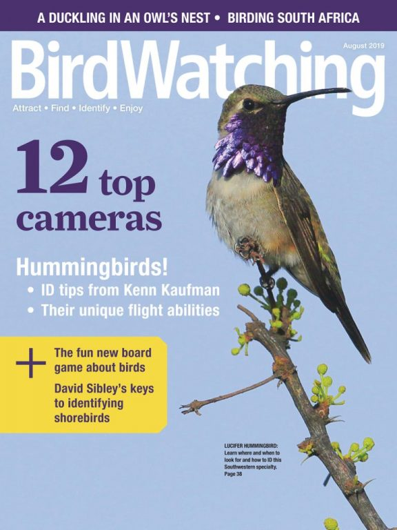 BirdWatching USA – July-August 2019