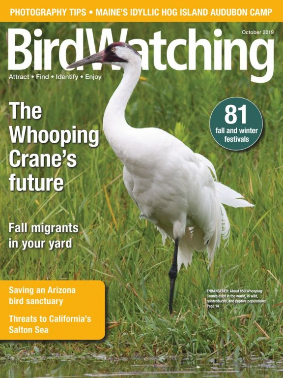 BirdWatching USA – September-October 2019