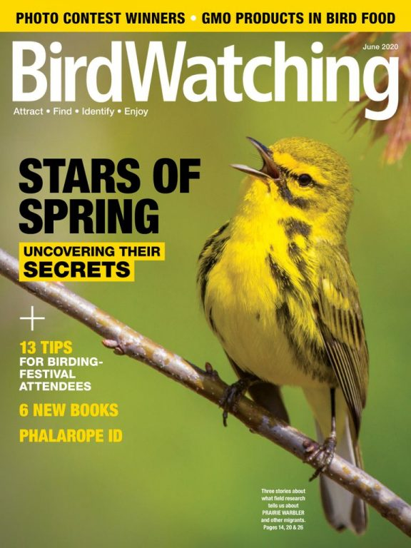 BirdWatching USA – May-June 2020