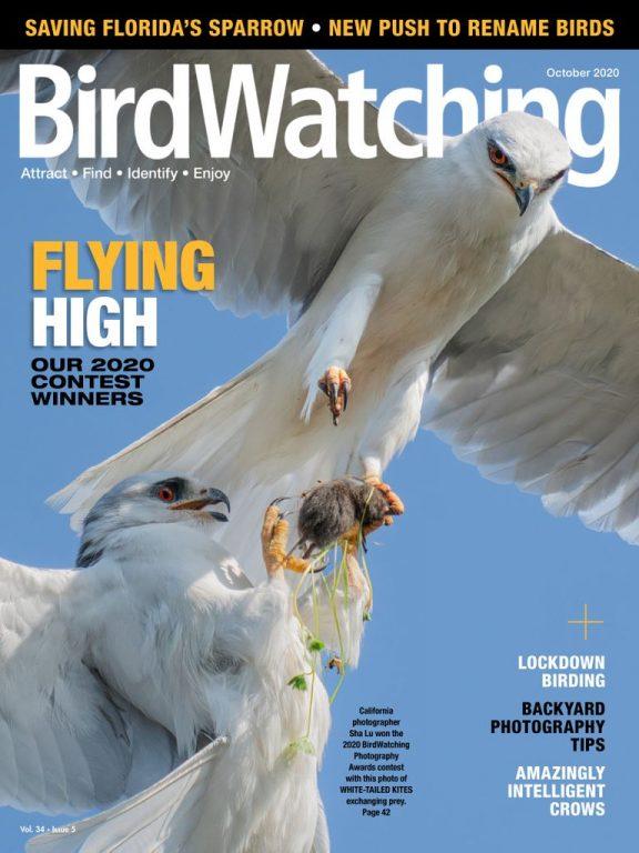 BirdWatching USA – September-October 2020